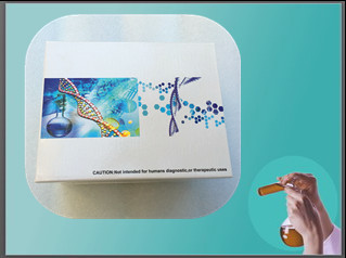 鱼类白介素1α(IL-1α)ELISA试剂盒