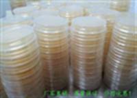 SBJ-ME2047甘露醇卵黄多粘菌素琼脂平板