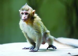 猴子血清,猴子血�{