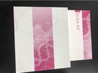 sPECAM-1/sCD31 大鼠可溶性血小板内皮细胞粘附分子1酶联免疫试剂盒