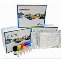 鱼γ干扰素(IFN-γ)ELISA试剂盒